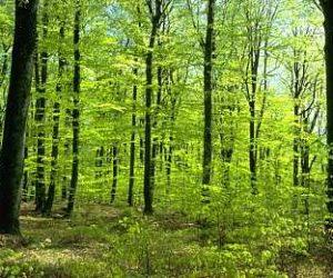 Wald-01
