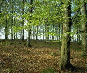 Wald-04